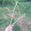 落ち枝のスター