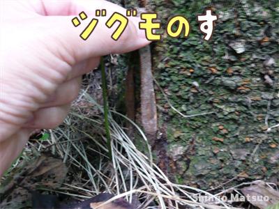 ジグモの巣の取りかた
