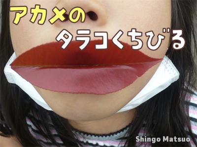 アカメのタラコ唇