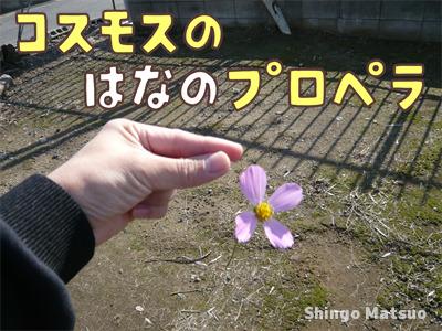 コスモスの花のプロペラ
