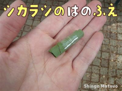 シラカシの葉の草笛の作り方