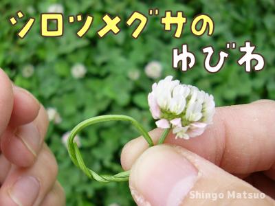 シロツメ草の指輪の作り方