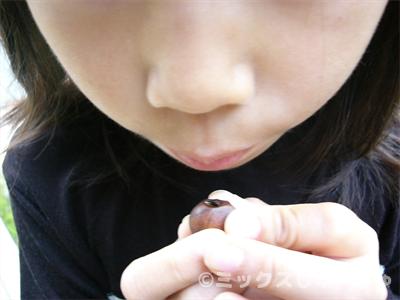 椿の実の笛の作り方