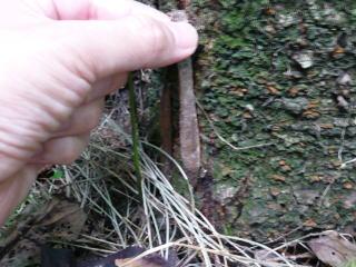 ジグモの巣の取り方