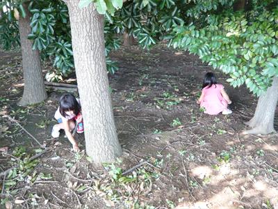 ドングリを集める子供