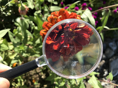 虫眼鏡の種類