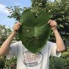 サトイモの葉っぱのお面