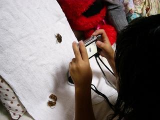 セミの羽化を観察する子ども